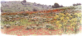 haGalil / Frühling in Galiläa