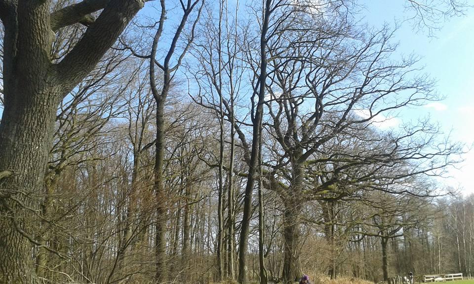 So groß und alt wie die Bäume im Duvenstedter Brook im Norden Hamburgs sind die jungen Birken im Blankeneser Björnsonweg nicht