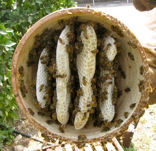 Bienenwohnung aus Terrakotta